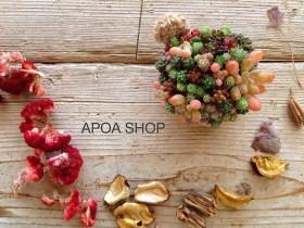Workshop 多肉植物 ちまちま寄せ 三重県津市 APOA
