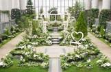 奇跡の星の植物館 淡路夢舞台 ホワイトフラワー ウォーターガーデンショー 2019
