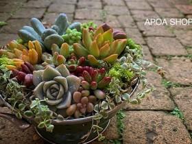 年末年始休業のお知らせ APOA 三重県津市