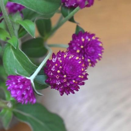 APOA,植物,ガーデニング,エクステリア