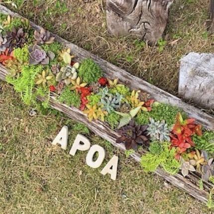 APOA,APOA SHOP,アポアショップ,アポア,ハロウィン,照明,sale,セール