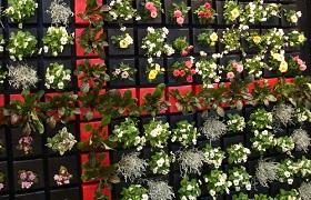 壁面緑化 ピコガーデン