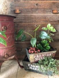 観葉植物 APOA 四日市店