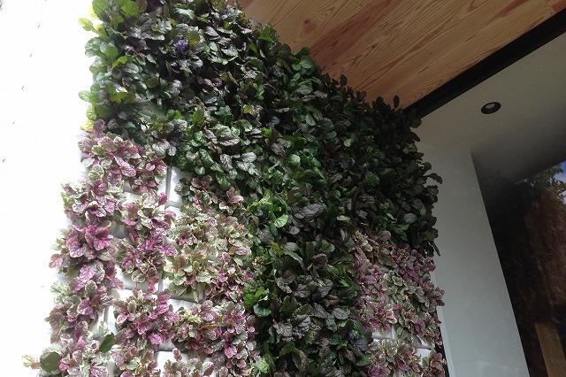 色を変える壁面緑化 簡単取り付け